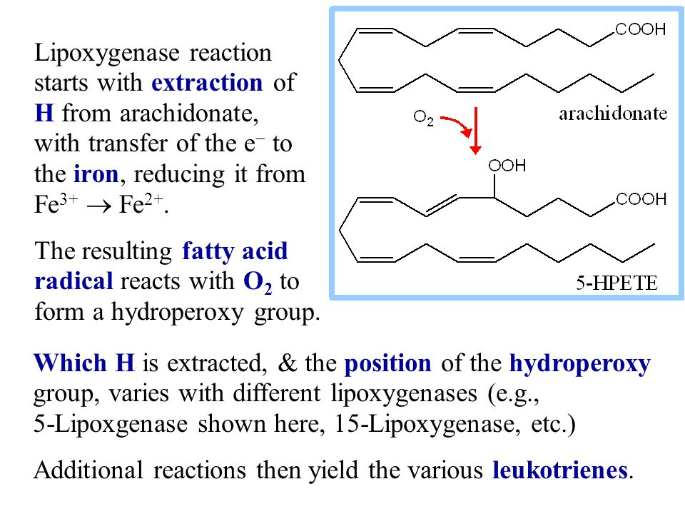Lipoxygenase reaction starts with extraction of H from arachidonate, with transfer of the e- to the iron, reducing it from Fe3+  Fe2+.