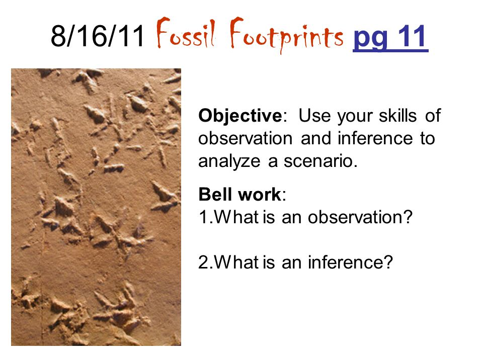 8/16/11 Fossil Footprints pg 11