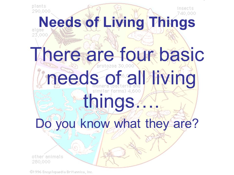 There are four basic needs of all living things….