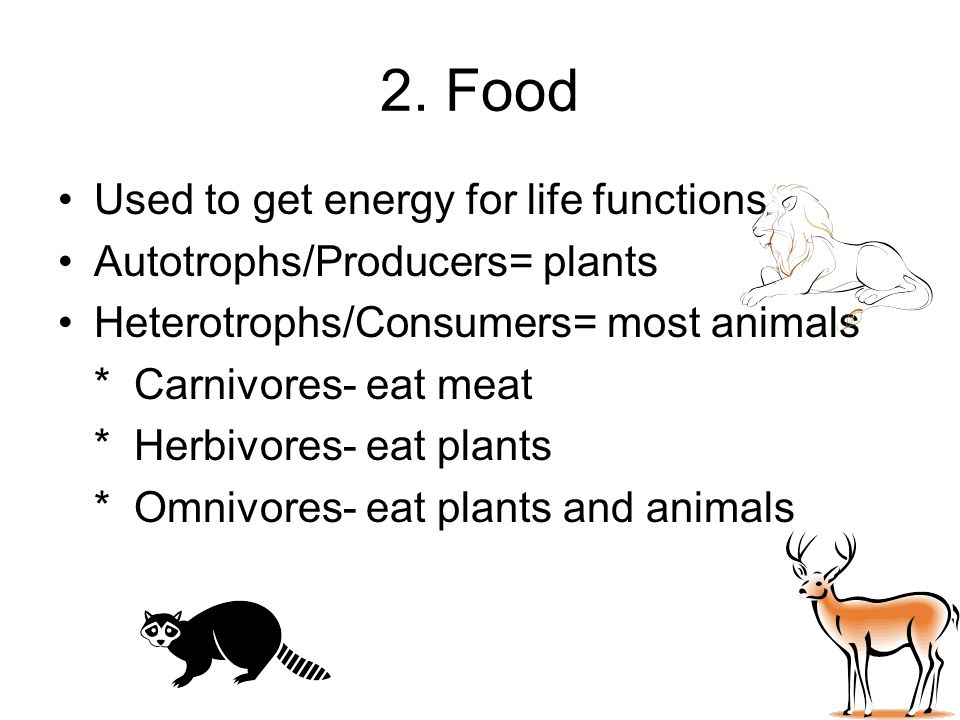 2. Food Used to get energy for life functions