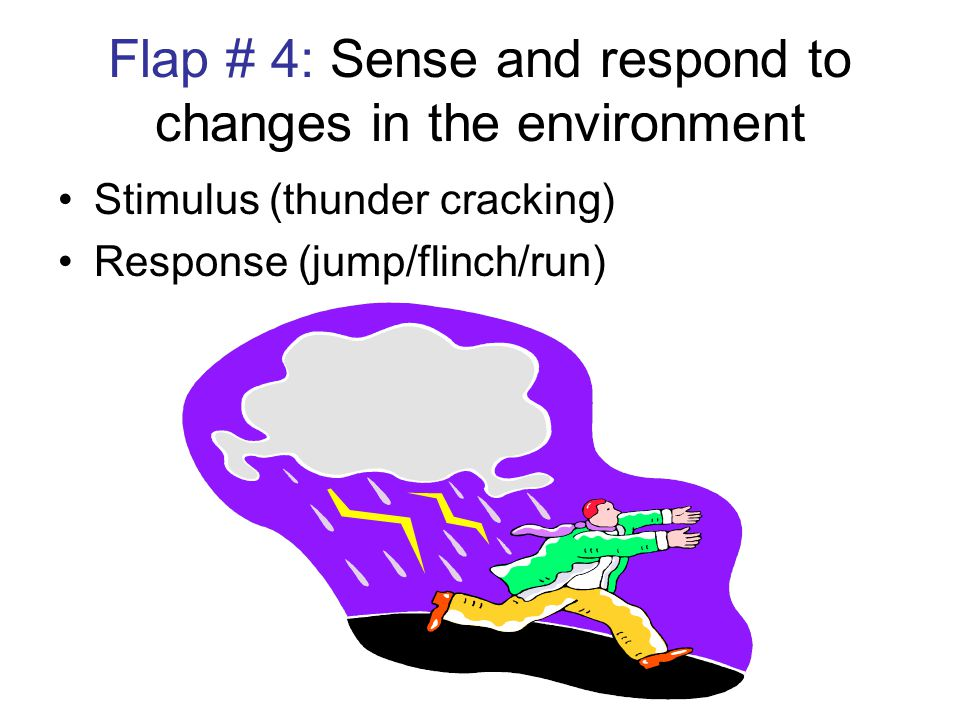 Flap # 4: Sense and respond to changes in the environment