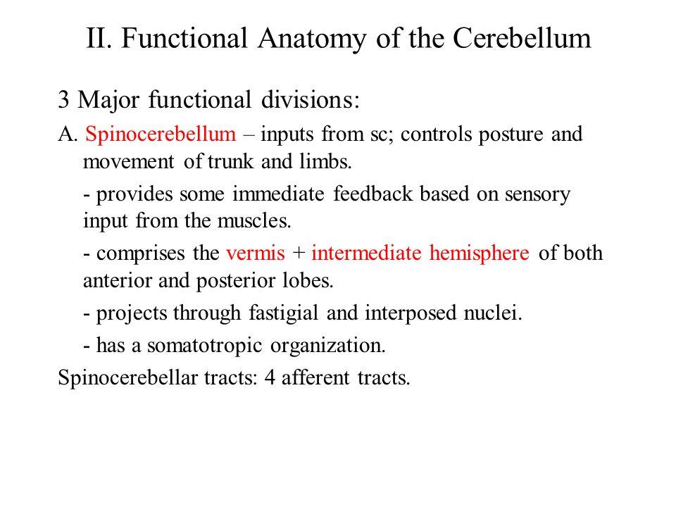 II. Functional Anatomy of the Cerebellum