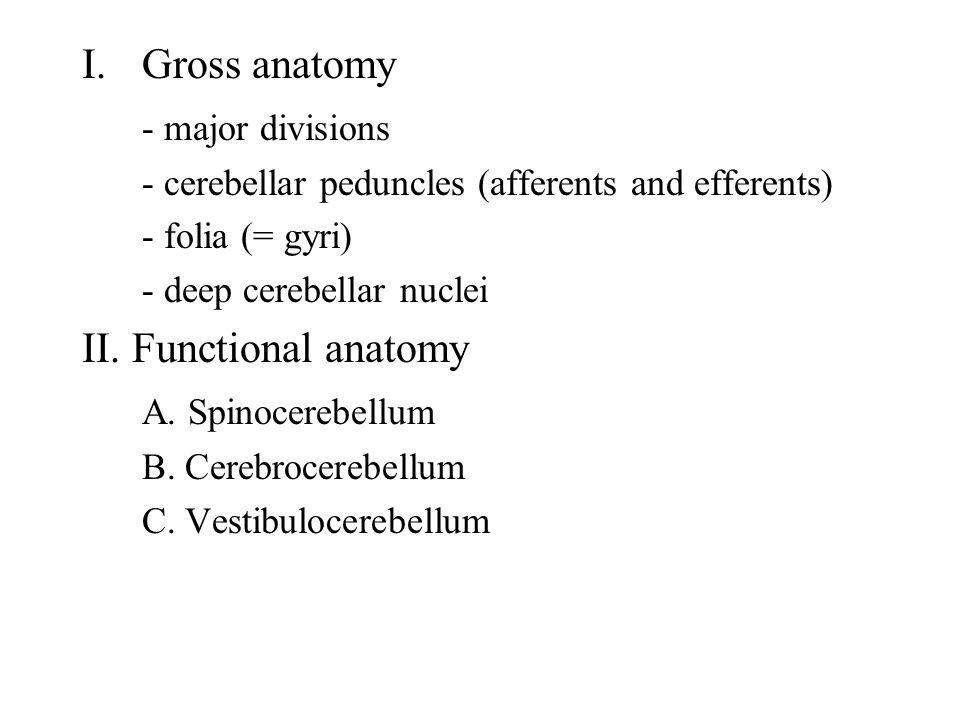 Gross anatomy - major divisions II. Functional anatomy