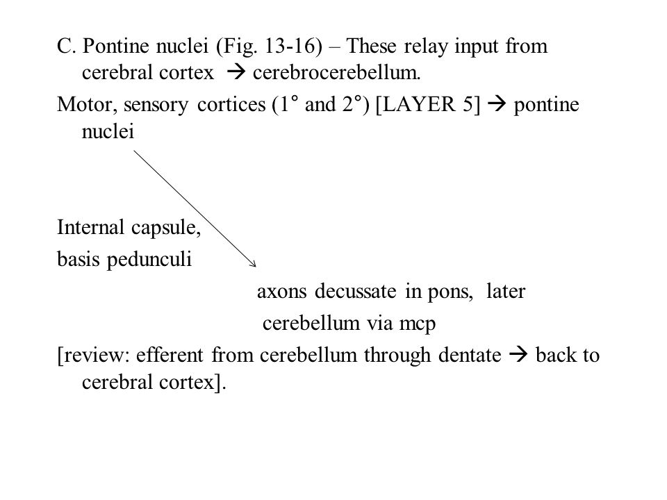 C. Pontine nuclei (Fig. 13-16) – These relay input from cerebral cortex  cerebrocerebellum.