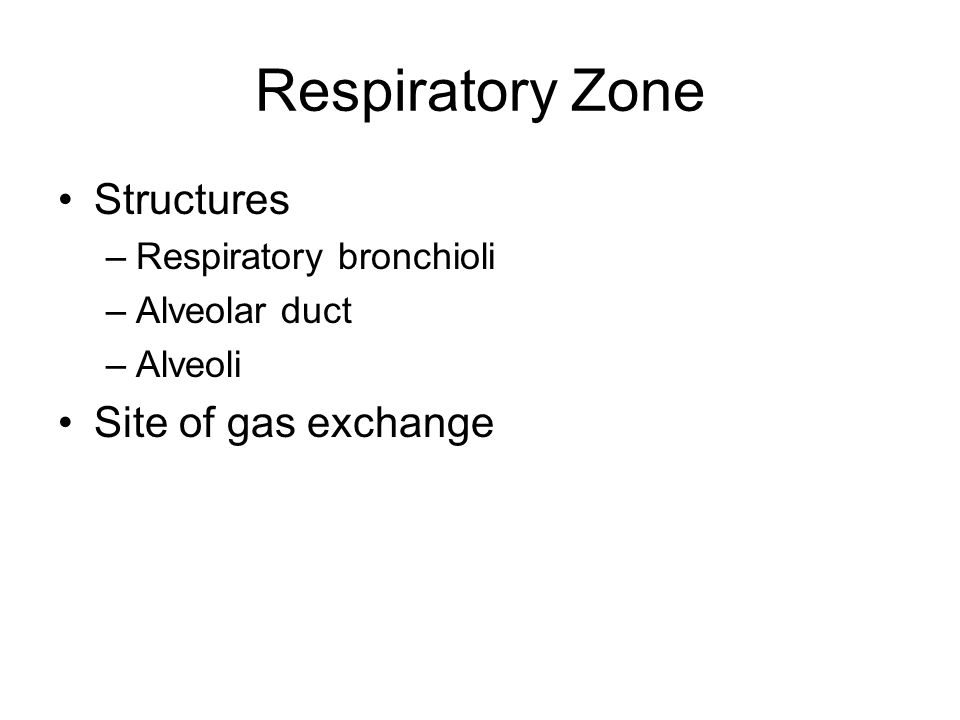 Respiratory Zone Structures Site of gas exchange
