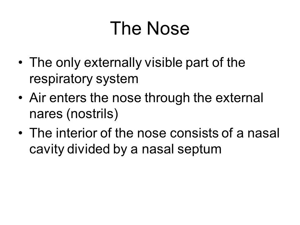 The Nose The only externally visible part of the respiratory system