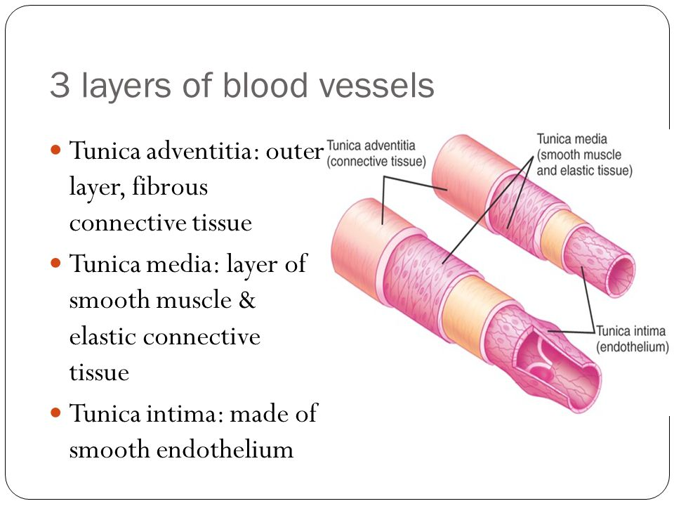 3 layers of blood vessels