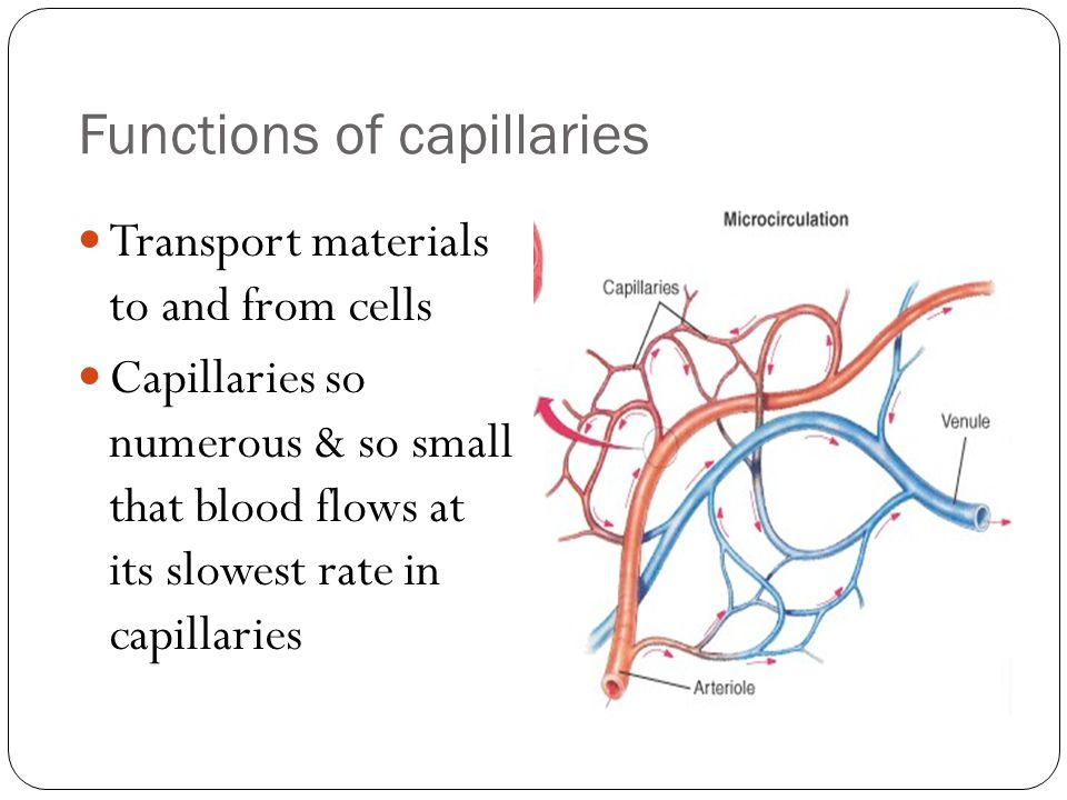Functions of capillaries