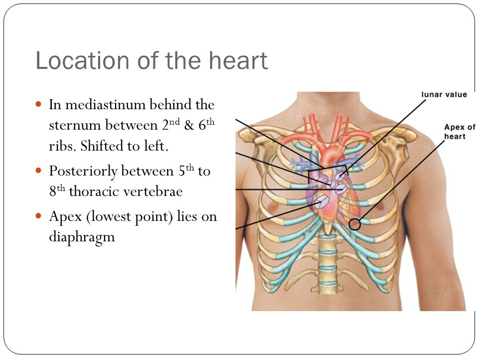 relationship between epicardium and pericardium of heart