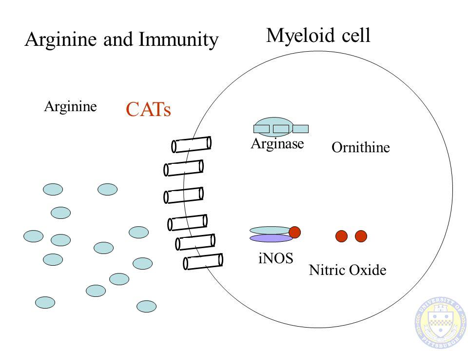 Myeloid cell Arginine and Immunity CATs Arginine Arginase Ornithine