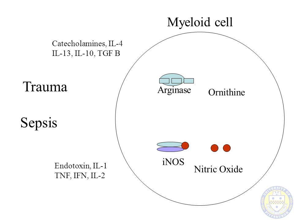 Trauma Sepsis Myeloid cell Arginase Ornithine iNOS Nitric Oxide