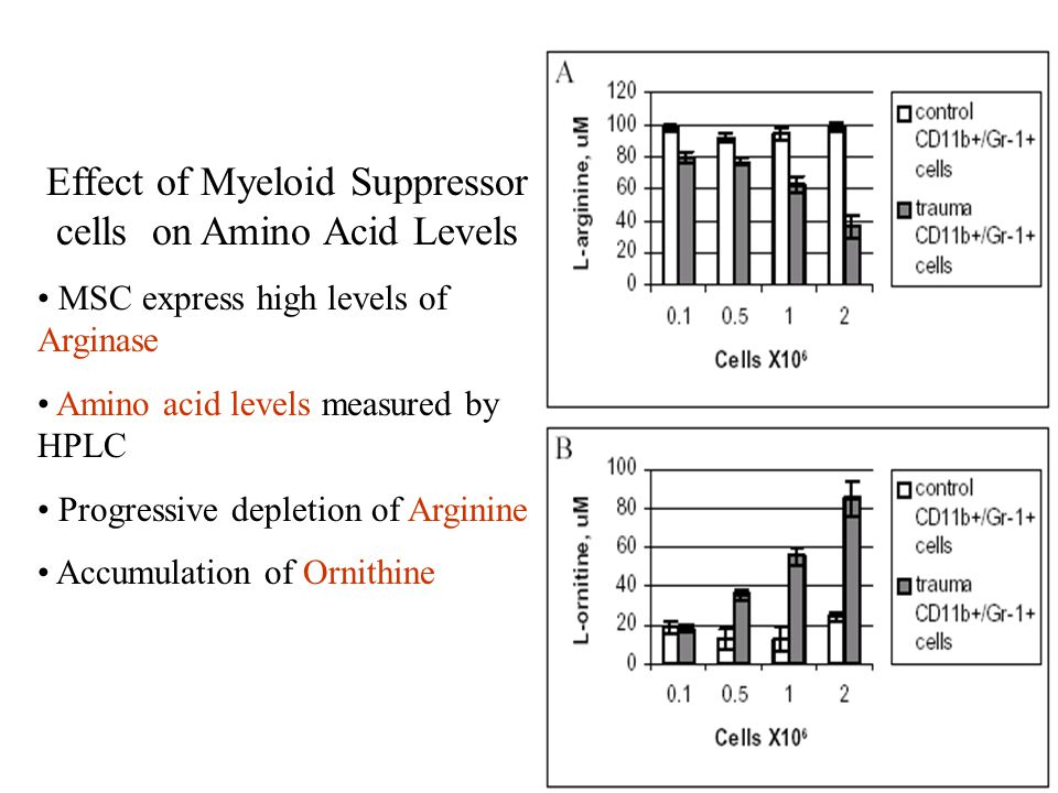 Effect of Myeloid Suppressor cells on Amino Acid Levels