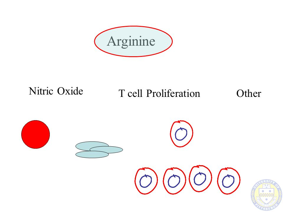 Arginine Nitric Oxide T cell Proliferation Other