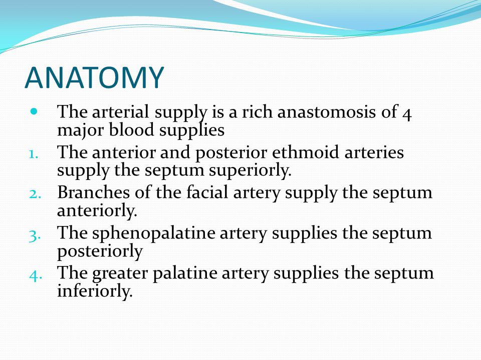ANATOMY The arterial supply is a rich anastomosis of 4 major blood supplies.