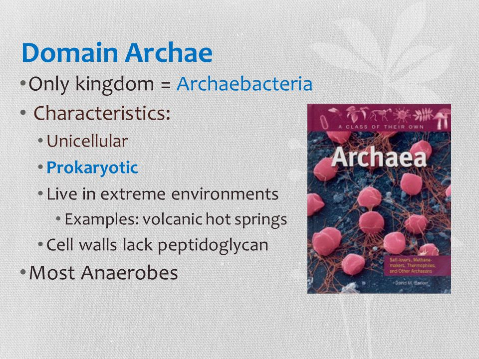 Domain Archae Only kingdom = Archaebacteria Characteristics: