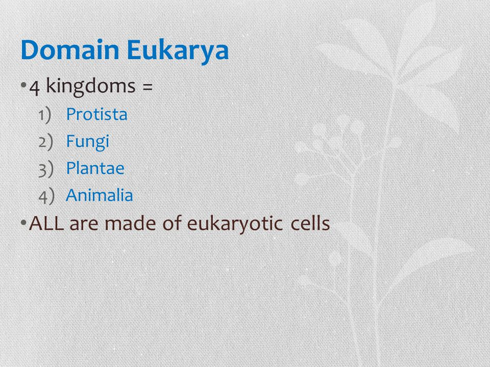Domain Eukarya 4 kingdoms = ALL are made of eukaryotic cells Protista