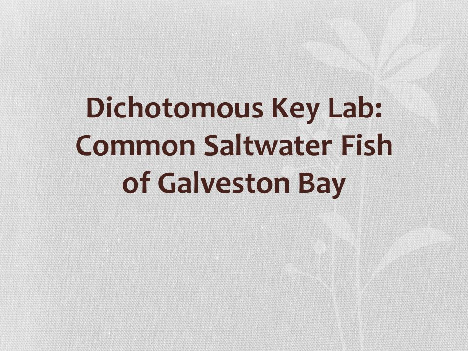 Dichotomous Key Lab: Common Saltwater Fish of Galveston Bay