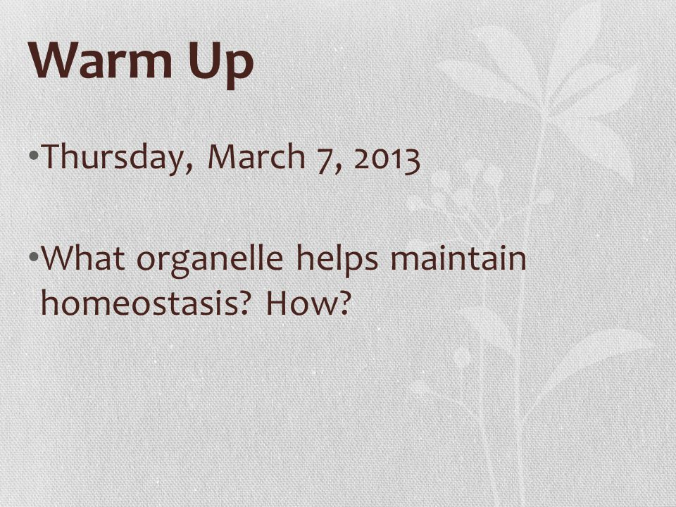 Warm Up Thursday, March 7, 2013 What organelle helps maintain homeostasis How