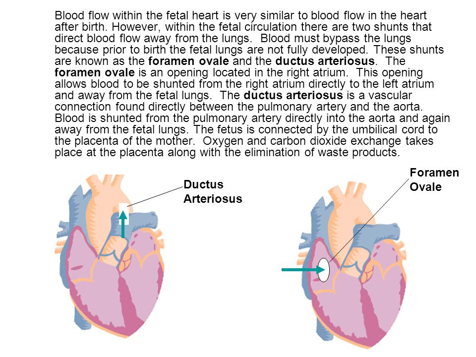 blood flow Blood circulation is an important part of your body's overall function and health your heart pumps blood through blood vessels within your circulatory.