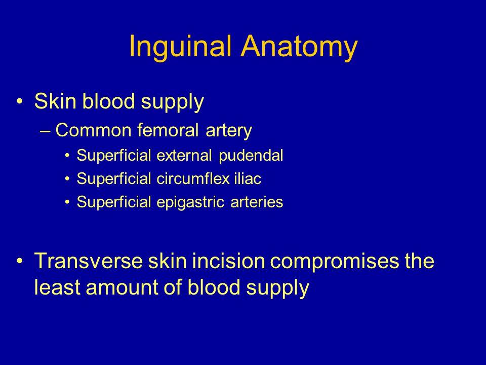 Inguinal Anatomy Skin blood supply