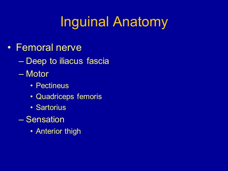 Inguinal Anatomy Femoral nerve Deep to iliacus fascia Motor Sensation