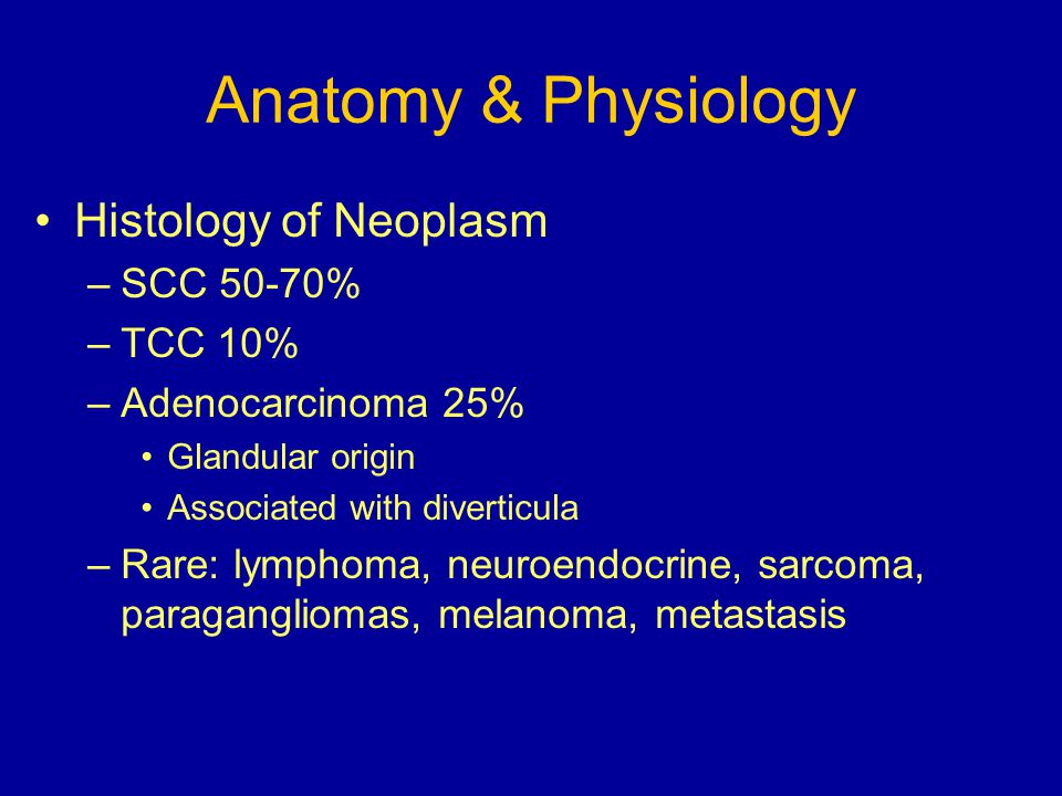 Anatomy & Physiology Histology of Neoplasm SCC 50-70% TCC 10%
