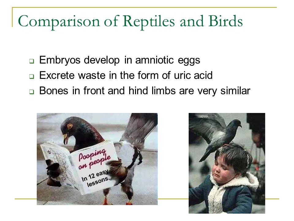 Comparison of Reptiles and Birds