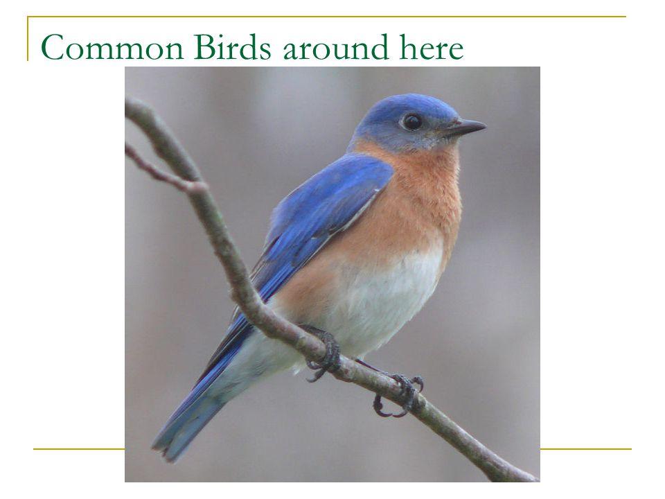 Common Birds around here