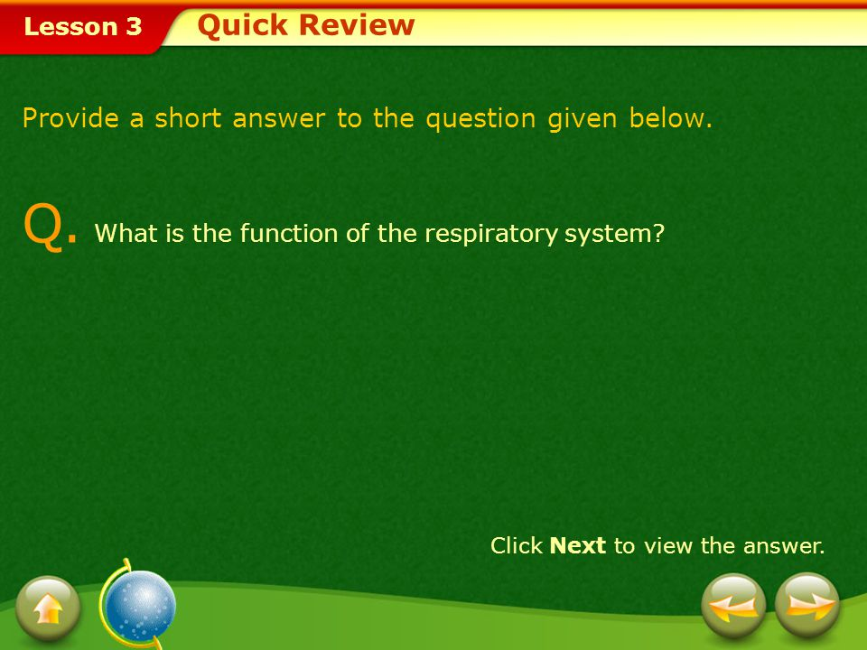 Q. What is the function of the respiratory system