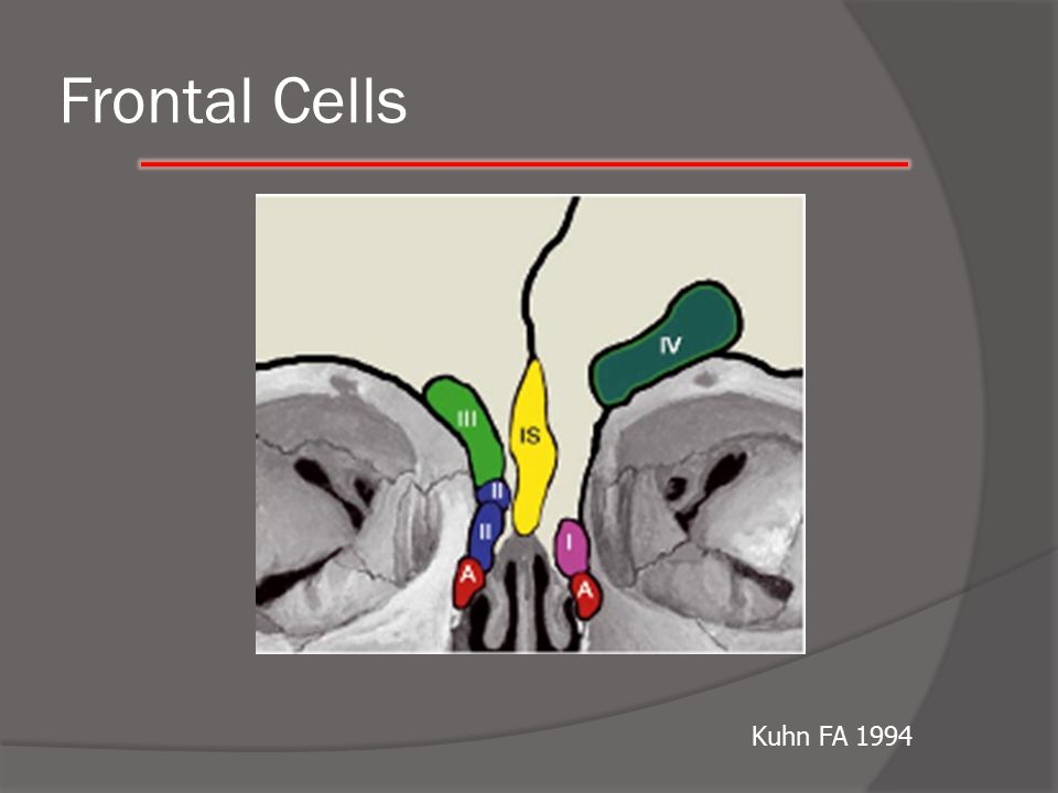 Frontal Cells