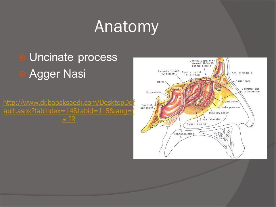 Anatomy Uncinate process Agger Nasi