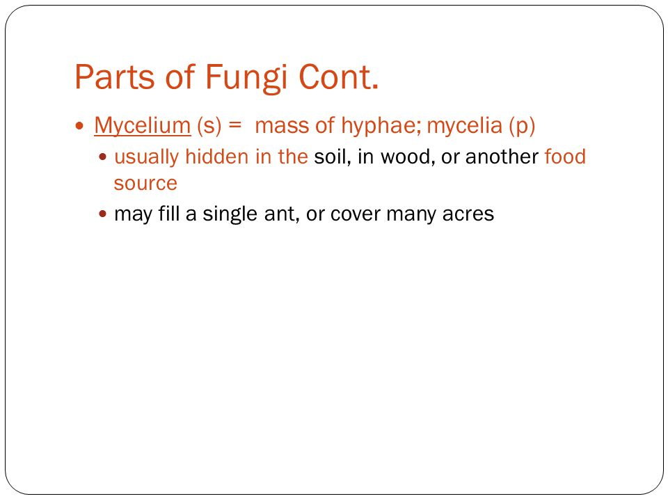Parts of Fungi Cont. Mycelium (s) = mass of hyphae; mycelia (p)