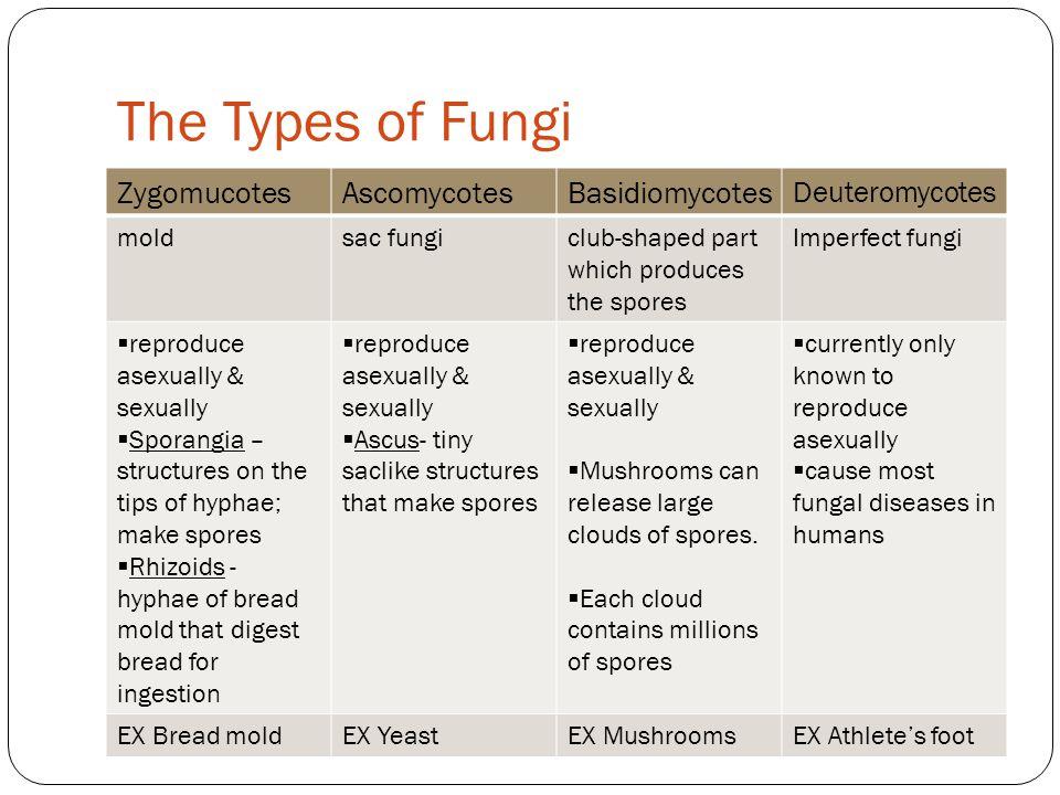 The Types of Fungi Zygomucotes Ascomycotes Basidiomycotes