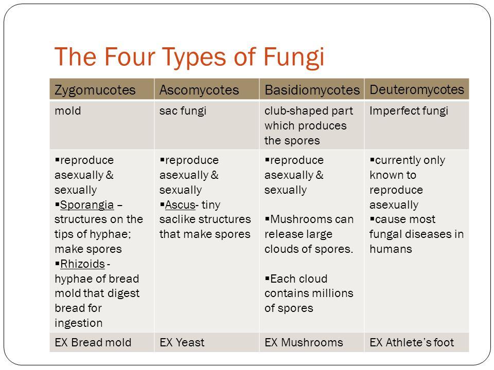 The Four Types of Fungi Zygomucotes Ascomycotes Basidiomycotes