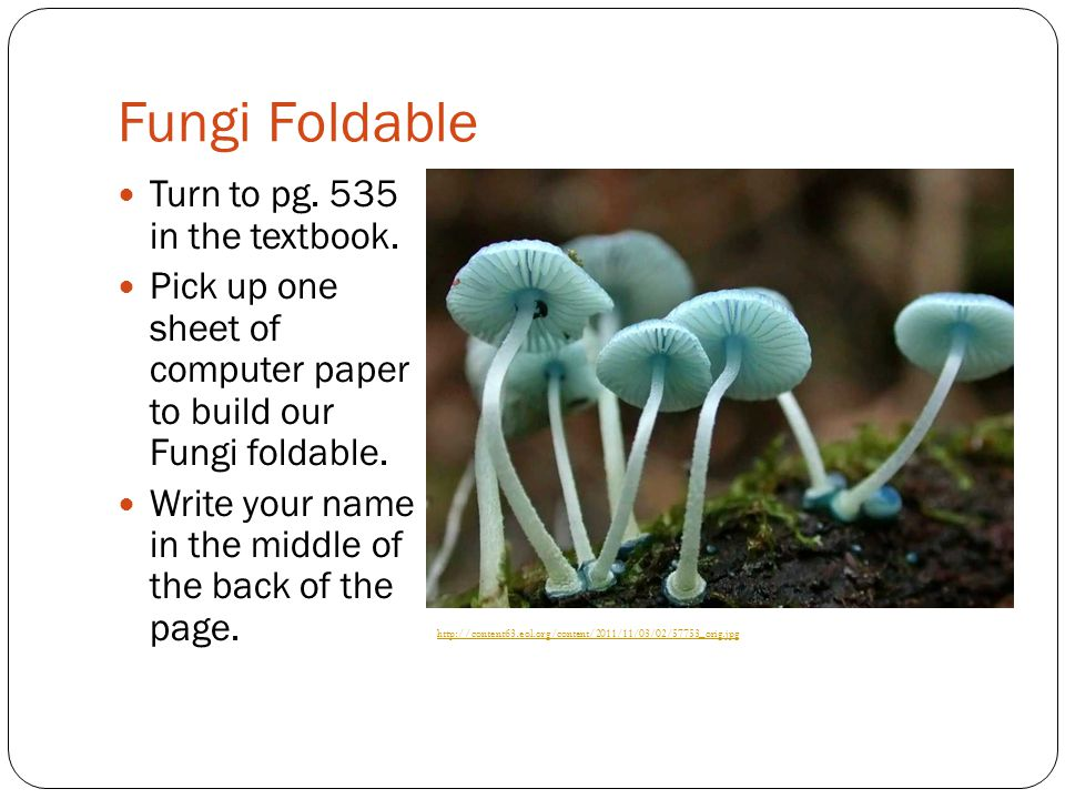 Fungi Foldable Turn to pg. 535 in the textbook.