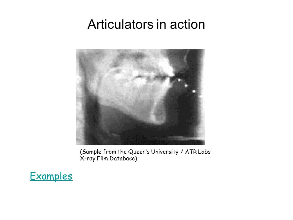 Articulators in action