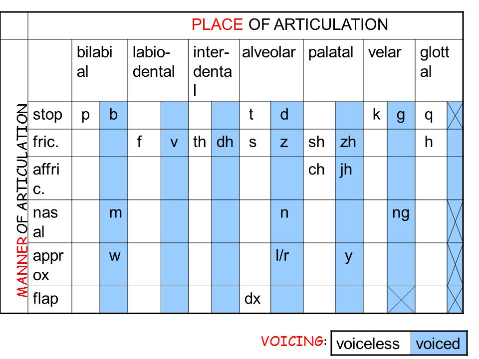 PLACE OF ARTICULATION bilabial labio-dental inter-dental alveolar