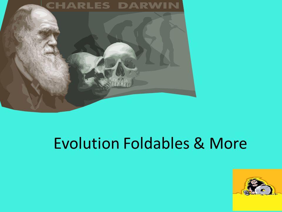 Evolution Foldables & More