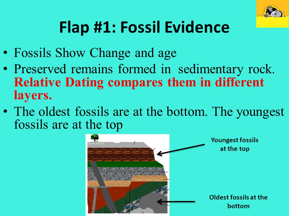 Flap #1: Fossil Evidence