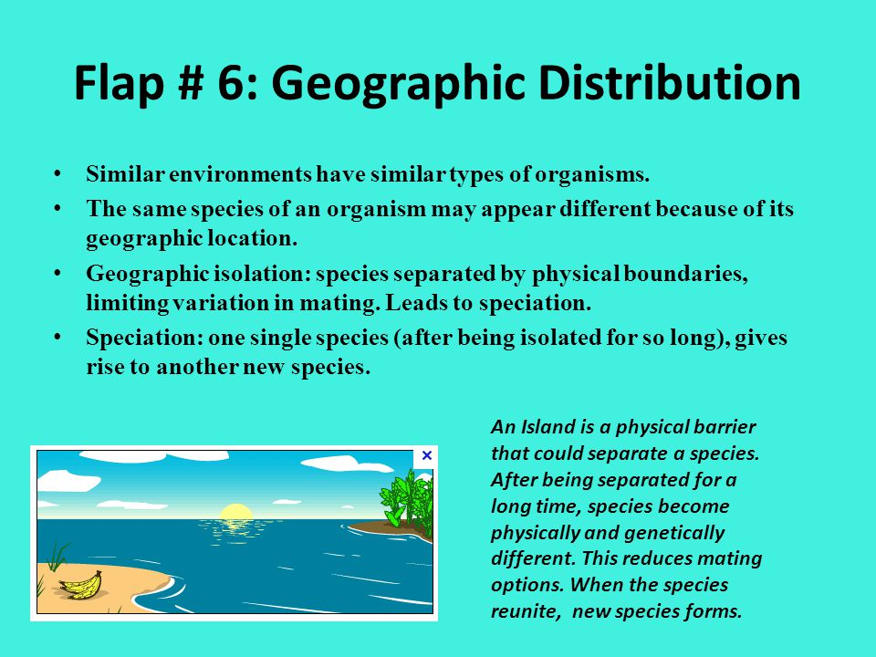 Flap # 6: Geographic Distribution