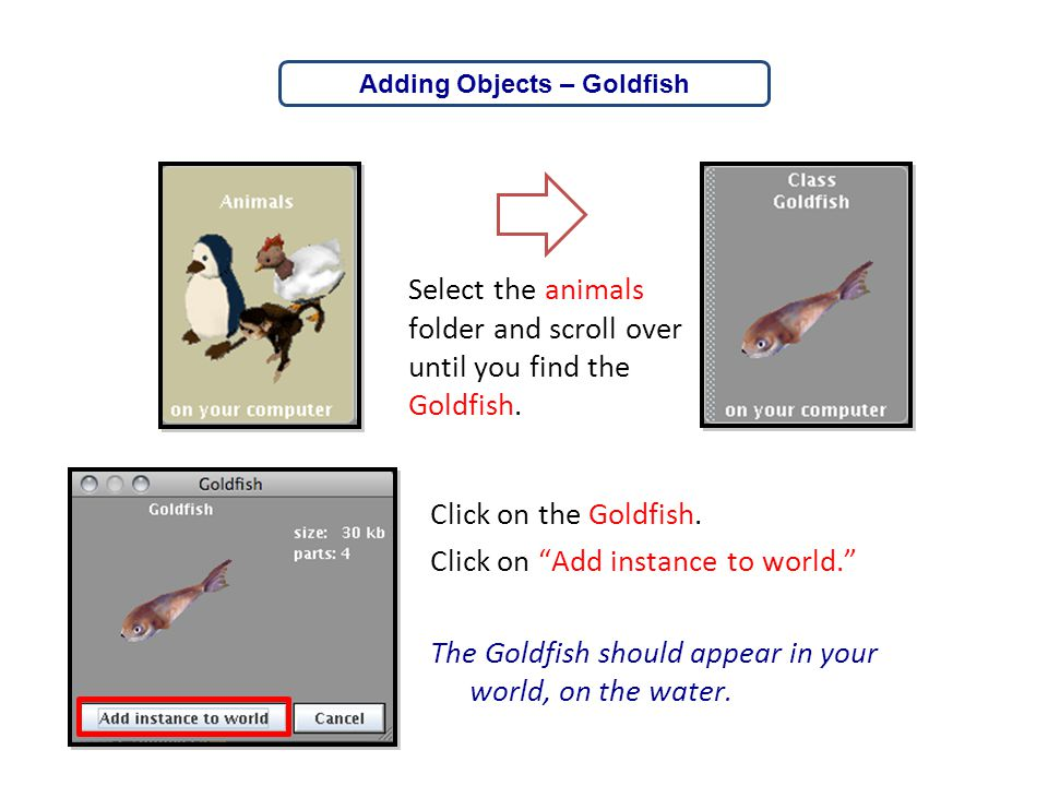 Adding Objects – Goldfish