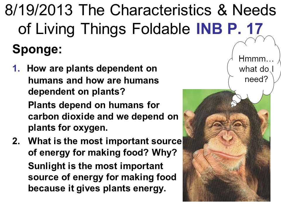 8/19/2013 The Characteristics & Needs of Living Things Foldable INB P