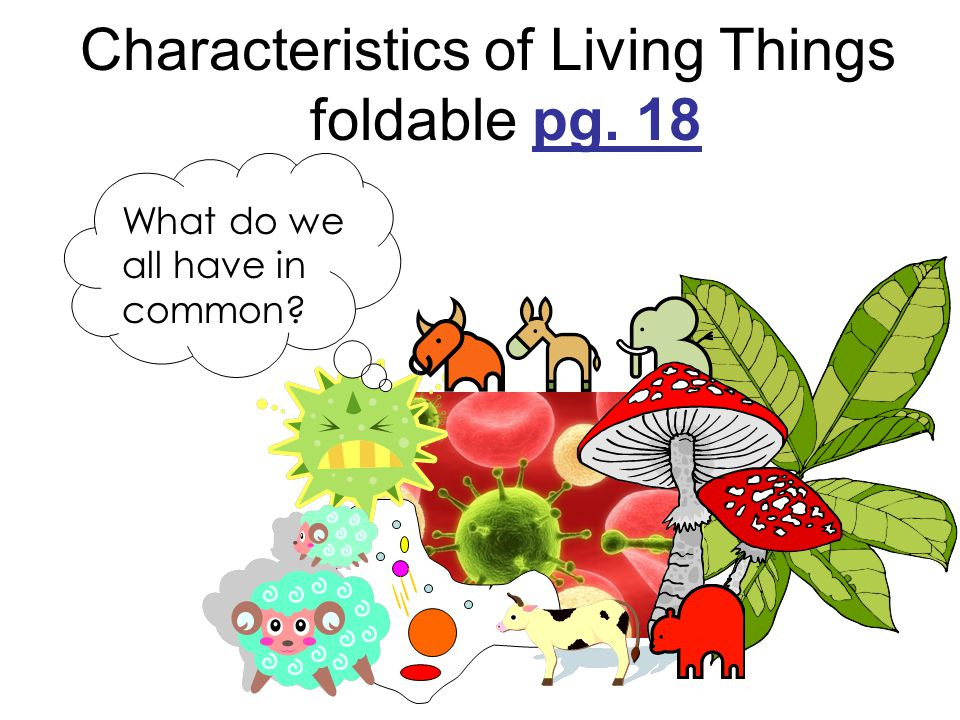 Characteristics of Living Things foldable pg. 18