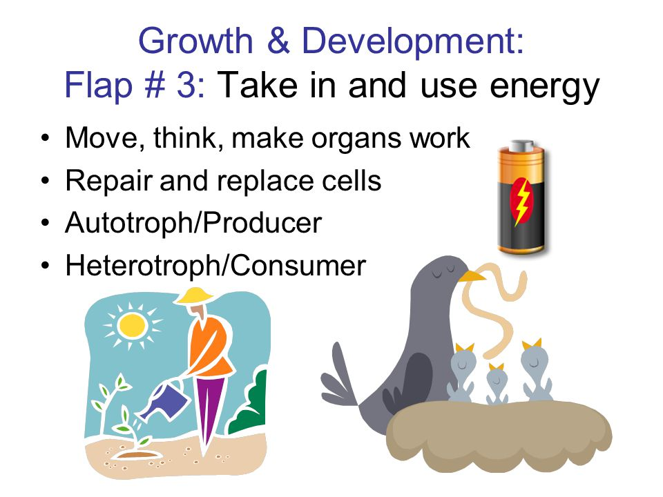 Growth & Development: Flap # 3: Take in and use energy