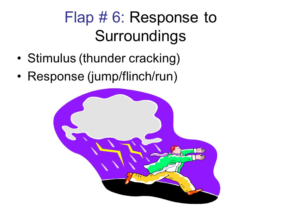Flap # 6: Response to Surroundings