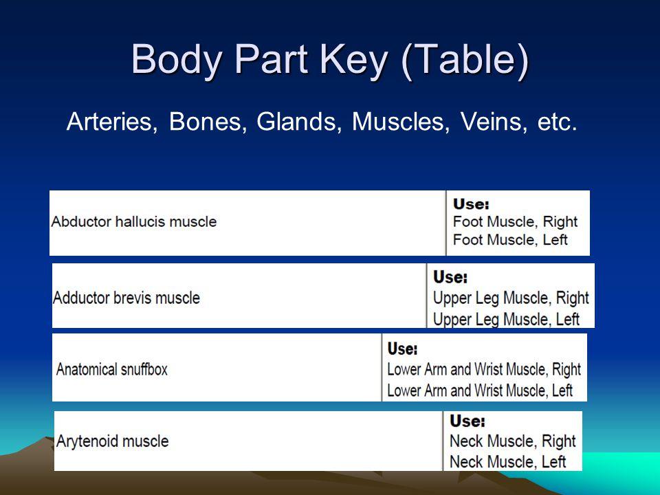 Body Part Key (Table) Arteries, Bones, Glands, Muscles, Veins, etc.