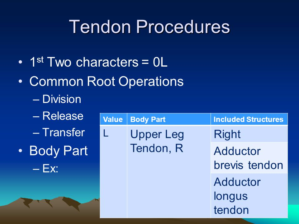 Tendon Procedures 1st Two characters = 0L Common Root Operations