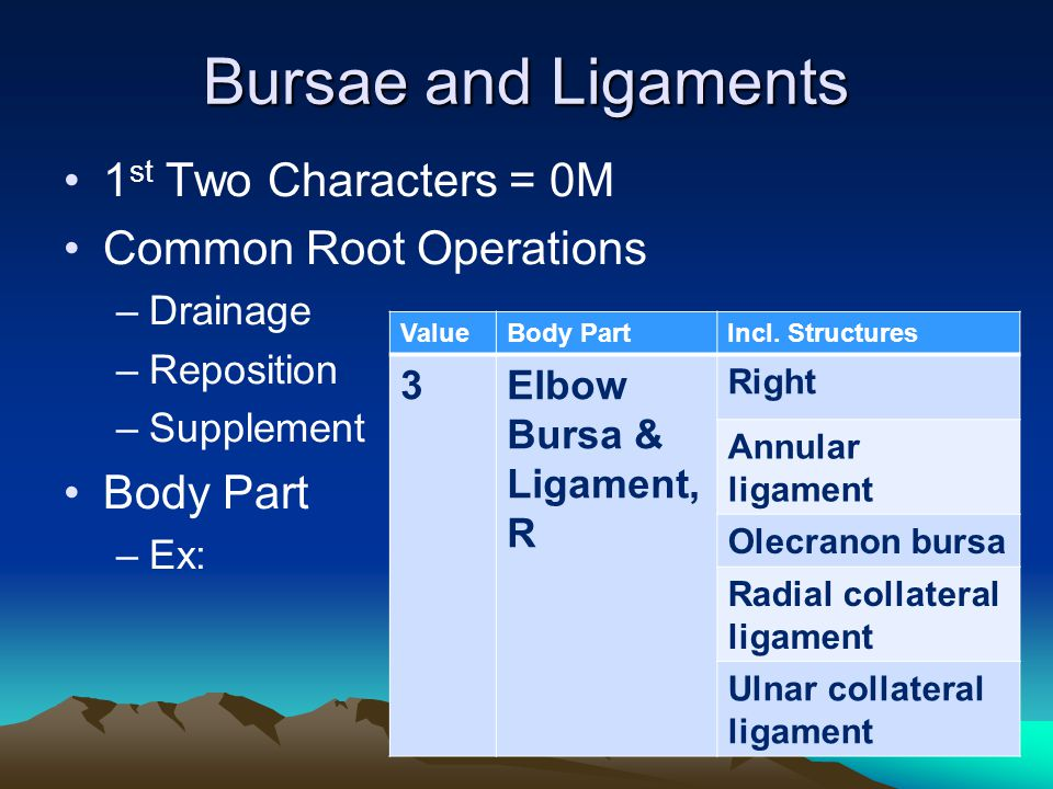 Bursae and Ligaments 1st Two Characters = 0M Common Root Operations