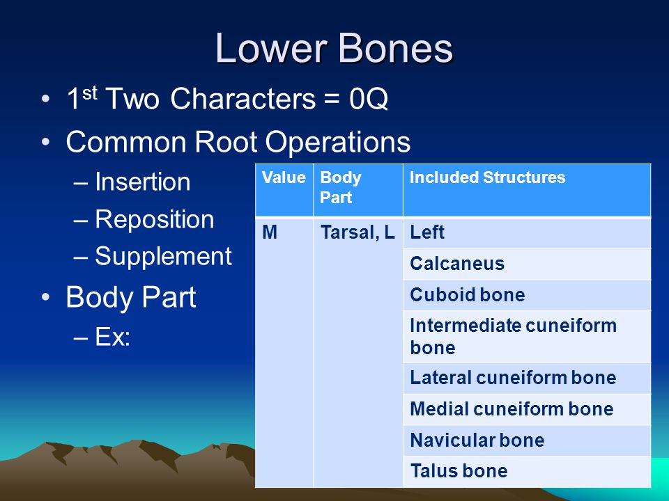 Lower Bones 1st Two Characters = 0Q Common Root Operations Body Part
