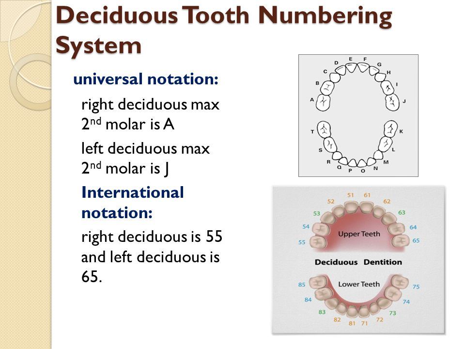 Deciduous Tooth Numbering System